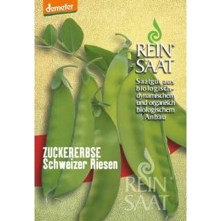 Zuckererbse Schweizer Riesen